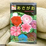 Amazon.co.jp【種子】あさがお [1041]