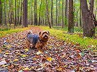 芸術はポスターを印刷します - 犬の秋の公園散歩 - キャンバスの 写真 ポスター 印刷 (80cmx60cm)