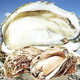 天然岩牡蠣 (活) 牡蠣 150g-250g前後 10個セット 鳥取産 岩牡蠣 カキ 刺身用 (岩ガキ/岩がき)