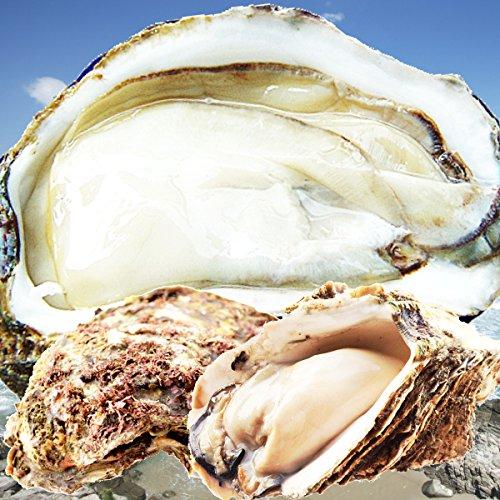 天然岩牡蠣 (活) 牡蠣 150g-250g前後 10個セット 鳥取産 岩牡蠣 カキ 刺身用 (岩ガキ/岩がき) (10個)