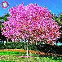 バウヒニア樹木多年生多年草咲く植物木がいっぱい庭の植物のための青い花セメントde flores-10pcs:1