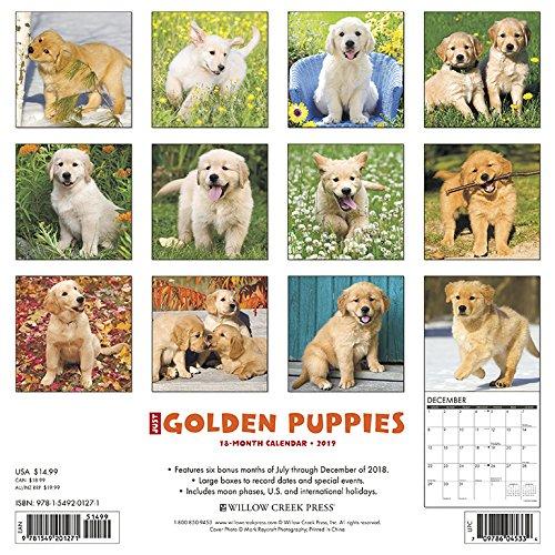 『Just Golden Puppies 2019 Calendar』の1枚目の画像