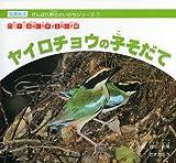 ヤイロチョウの子そだて—四万十川流域に飛来する森の妖精 (がんばれ野生のいのちシリーズ (1))