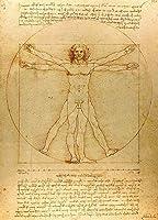 Vitruvian Man by Leonardo da Vinci reproduction Rolledキャンバス印刷24x 31in。