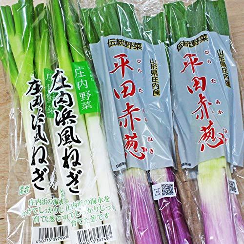 平田 赤ネギ&庄内浜風ネギセット 送料無料 山形県庄内産 新鮮 地物野菜 赤ねぎ 葱 在来作物