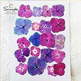 押し花素材 アジサイ ピンク・紫カラーミックス20枚(S-533) 【レジンやキャンドルなどハンドメイド素材にピッタリです♪】