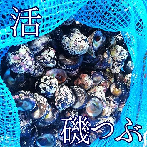 産直丸魚 洋野町種市産 活 磯つぶ 1kg入 (時季ならではの、活きた磯つぶをお届けします!)   磯つぶ いそつぶ くぼ貝 ながらみ しったか