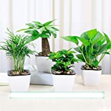4 Pack Self Watering Planter African Violet Pots White Mini Square Flower Plant Pot with Wick Rope Indoor for Succulent, Flow
