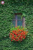 50個の鉢植え盆栽レッドParthenocissusルのDIYのホームハウスウォールの美しい装飾的な花のMIXカラー:4