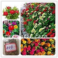 1000年個プリティパステルカラージニア盆栽熱耐性ガーデン草花の鉢植えグラム中国の花簡単成長:500ミックス