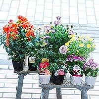 【マケプレお急ぎ便対応】季節の鉢物福袋セット 何が入っているかは届いてからのお楽しみ! ガーデニングや寄せ植えに最適 鉢花 鉢植え 苗物 フラワーギフト 早い者勝ち!いろいろな色・種類・価格帯が選べます! 開店祝い 新築祝い 誕生日祝い ガーデニング 春の寄せ植え primeお急ぎ便 (Lサイズ(12~14個のおまかせ))