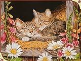 クロスステッチ刺繍キット可愛い猫ちゃんCSD-A401生地に図案印刷