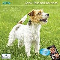 LittleGifts Jack Russell 2016 Calendar (1247) [並行輸入品]