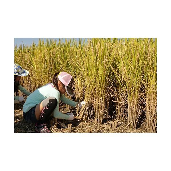 【精米】栃木県産 JAしおのや 白米 なすひ...の紹介画像10