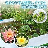 (ビオトープ/水辺植物)おまかせ水辺植物レイアウト(スイレン付) 3000円セット 本州・四国限定[生体]