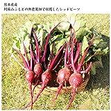 レッドビーツ 5個(葉付き) 無農薬 レッドビート 薬膳 オーガニック 自然食 ビート スーパーフード