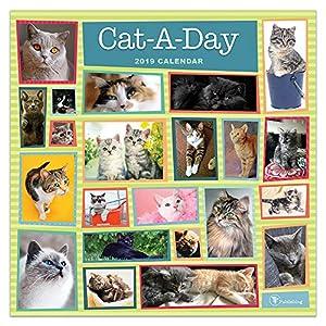 Cat-a-day 2019 Calendar