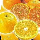 国華園 おいしい柑橘2種セット 10㎏【※発送が国華園からの場合のみ正規品です】