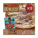 石垣島活き車エビ1kg(26~33尾) 3箱セット