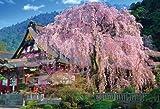 1000ピース 枝垂れ桜咲く久遠寺 71-385 / ビバリー