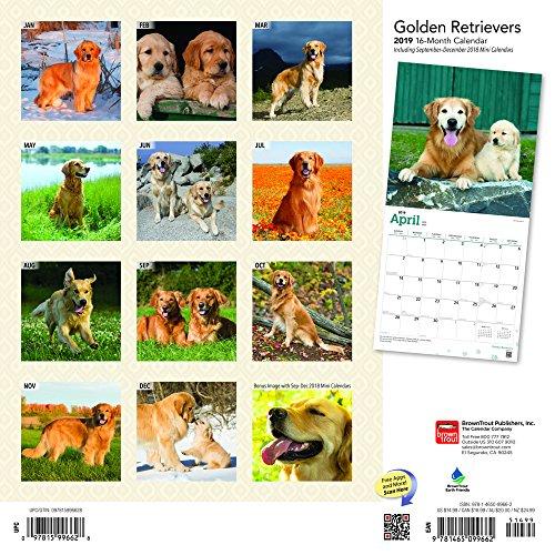 『Golden Retrievers 2019 Calendar』の1枚目の画像