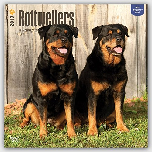 Rottweilers 2017 Calendar (Square Wall)