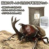 (昆虫)国産カブトムシ幼虫お手軽飼育セット ホワイト(説明書付) 本州・四国限定[生体]