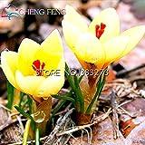 20枚ホット販売パープル多くの品種サフランサフランの花の種サフランクロッカスの種子は、それはサフランの球根無料船ではありません