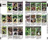 増補改訂版 日本のチョウ: 日本産全種がフィールド写真で検索可能 (フィールドガイド) 画像