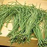 Snake Bean Black Seeded 10 Seeds Climbing Long Asian Vegetable Garden Yardlong