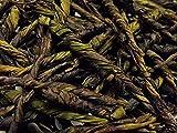 苦丁茶(一葉茶) 50g