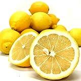 レモン 国産 静岡産 国産レモン 2kg 秀品 檸檬 れもん 果物 フルーツ ノーワックス 防腐剤未使用