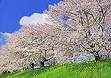 A3サイズミニポスター 堤の桜並木