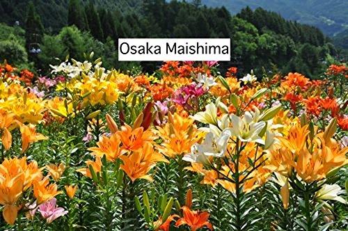 Osaka Maishima (Norwegian Edition)