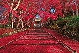 ジグソーパズル 秋色の紅葉参道 (京都) 1000ピース (50x75cm)