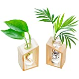 Ivolador Crystal Glass Test Tube Vase in Wooden Stand Flower Pots for Hydroponic Plants Home Garden Decoration