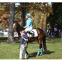 FIFTY IMAGES  The Montpelier Hunt Races: Steeplechase Horse Races, Virginia, USA