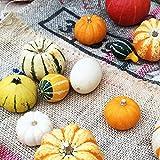 おもちゃかぼちゃ ハロウィン観賞用かぼちゃ 1個 装飾 飾り付け ハロウィン