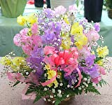 春の花 スイトピーとかすみ草のアレンジメント【生花】色はミックス 誕生日プレゼントや送別・お祝いなどの花ギフト