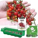 春まき種の苗つくりセット:トマト:マイクロトマト[超小粒!サラダの飾りに!] ノーブランド品