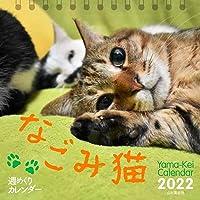 【Amazon.co.jp 限定】カレンダー2022 週めくりカレンダー なごみ猫 (卓上/壁掛け・リング)【特典データ…