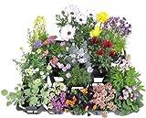 季節の寄せ植え 苗セット(16苗入り)