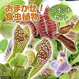 charm(チャーム) (食虫植物)おまかせ食虫植物 (3ポットセット)