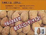 種子島産安納紅S品5kg