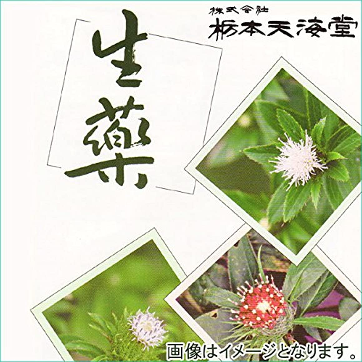 ステレオタイプ不定繊細カロジツ(刻) 500g