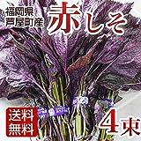 Amazon.co.jp赤しそ 赤紫蘇 赤シソ 4束入 1kg 福岡県産 赤紫蘇 赤シソ