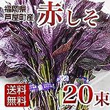 赤しそ 赤紫蘇 赤シソ 20束 福岡県認定エコファーマー福岡県産