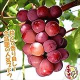 国華園 果樹苗 ブドウ クイーンニーナPウイルスフリー苗 1株