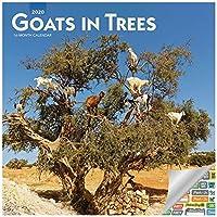 木の中のヤギ カレンダー 202020セット デラックス 2020 ヤギ 壁カレンダー 100枚以上のカレンダー ステッカー付き (楽しいギフト オフィス用品)