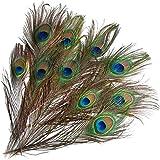 Fityle 23-33cm 10本入り ピーコック フェザー 羽根 目玉羽 装飾用羽根 孔雀羽